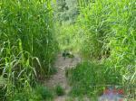 Naturgarten_Elbufer Gisela Pothin-Wulf