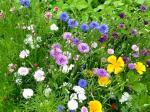 Vielfalt Blumenbeet von Monika Germ