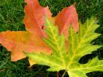 Herbst-Verwandlung-von-Monika-Germ