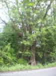 Baum-mit-einem-sichtbaren-Herzen