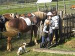 Pferd-und-Menschen-2